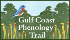 Gulf Coast Phenology Trail Workshop @ Grand Bay NERR Coastal Resources Center | Moss Point | Mississippi | United States